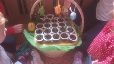 Sianie owsa Dominika Kobylak Dzień Ochrony Środowiska Dzień Ziemi Kreatywnie z dzieckiem Prace plastyczne (Wielkanoc) Prace plastyczne (Wiosna) Wielkanoc Wiosna