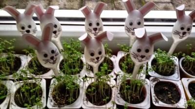 Sianie owsa Dominika Kobylak Dzień Ochrony Środowiska Dzień Ziemi Kreatywnie z dzieckiem Prace plastyczne Prace plastyczne Wielkanoc Wiosna