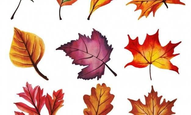 Krótkie Wiersze O Podstawowych Kolorach Tęczy Jesieni Dla
