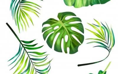 Palmy na Niedziele Palmową