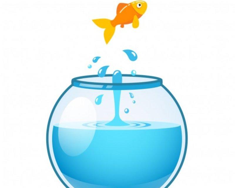 Bileciki do prezentów: złota rybka