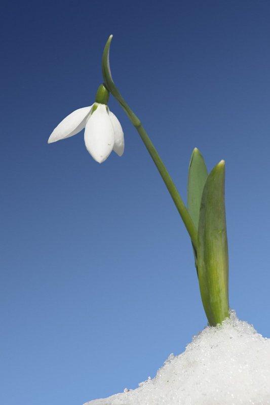 Oznaki wiosny Agata Dziechciarczyk Wierszyki Wiosna