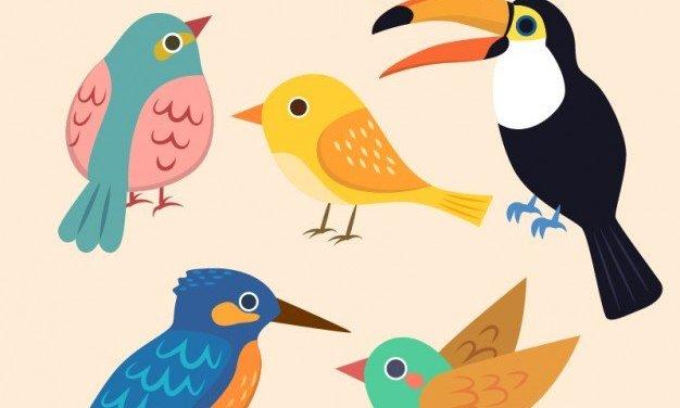 Spotkanie z ptakami