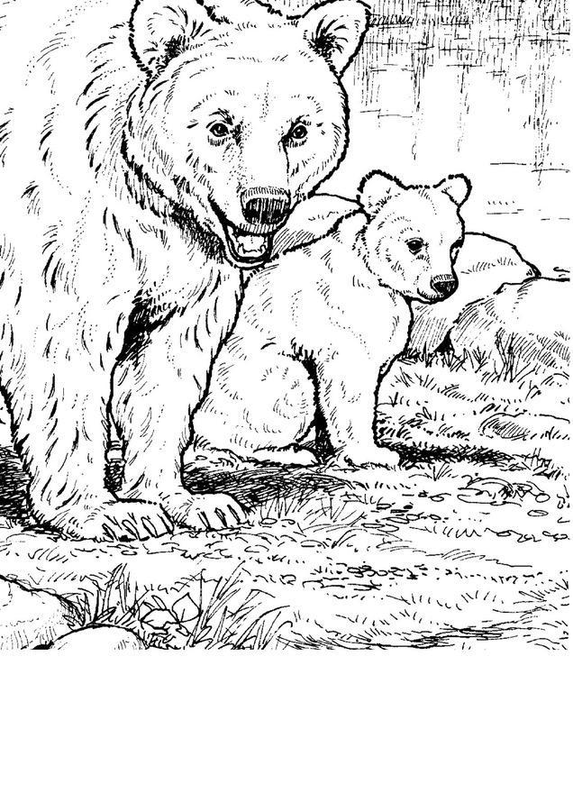 Kolorowanki XXL: Misie Dzień Niedźwiedzia Dzień Pluszowego Misia Kolorowanki Kolorowanki XXL