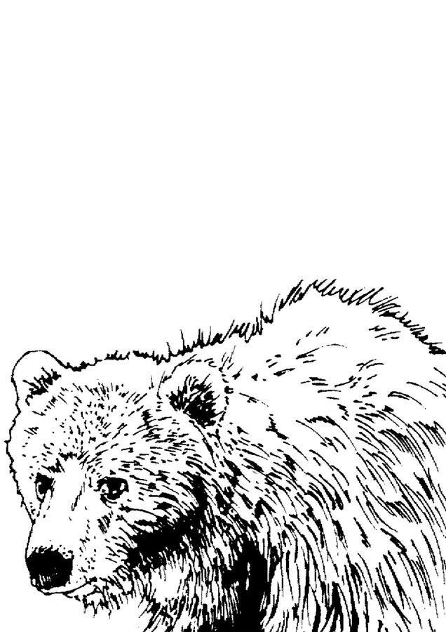 Kolorowanki XXL: Misie Dzień Niedźwiedzia Polarnego Dzień Pluszowego Misia Kolorowanki Kolorowanki (Dzień misia) Kolorowanki XXL Zwierzęta (Kolorowanki)