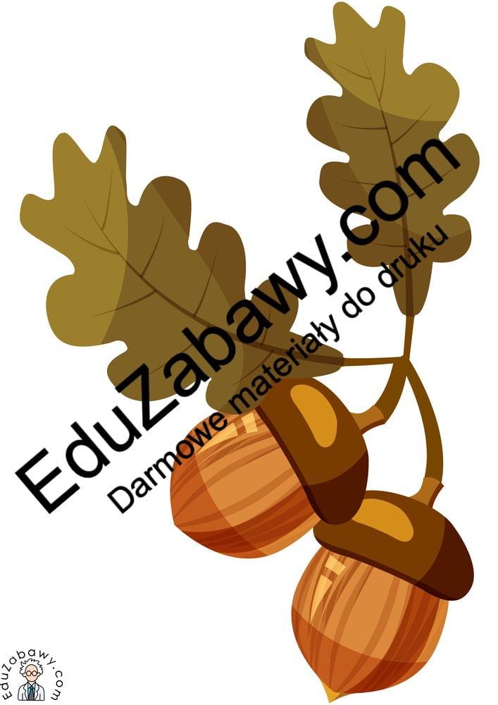 Dekoracje: Kasztany i żołędzie (7 szablonów) Dekoracje Dekoracje (Dzień Drzewa) Dekoracje (Jesień)