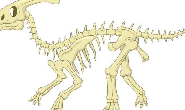 Dekoracje: Szkielet Dinozaura (10 szablonów)