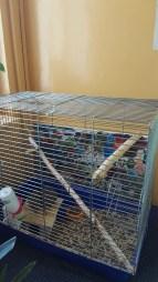 MMS w Przyłękowie - szkolne zwierzaki