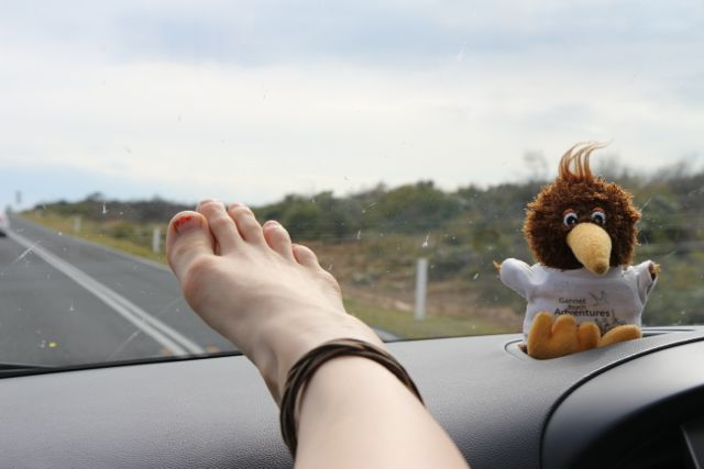 Road trip with our kiwi
