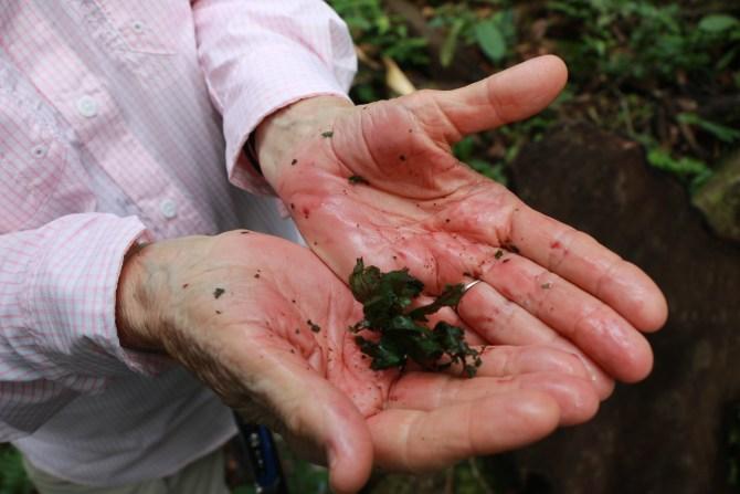 rubbing the leaf