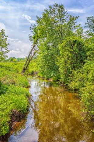 Creek at Start of June