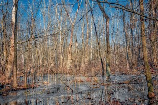 Marsh During February Thaw