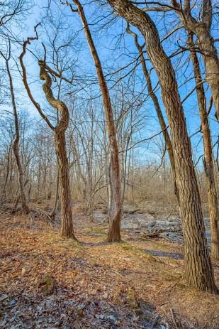 Trail Two Through Trees