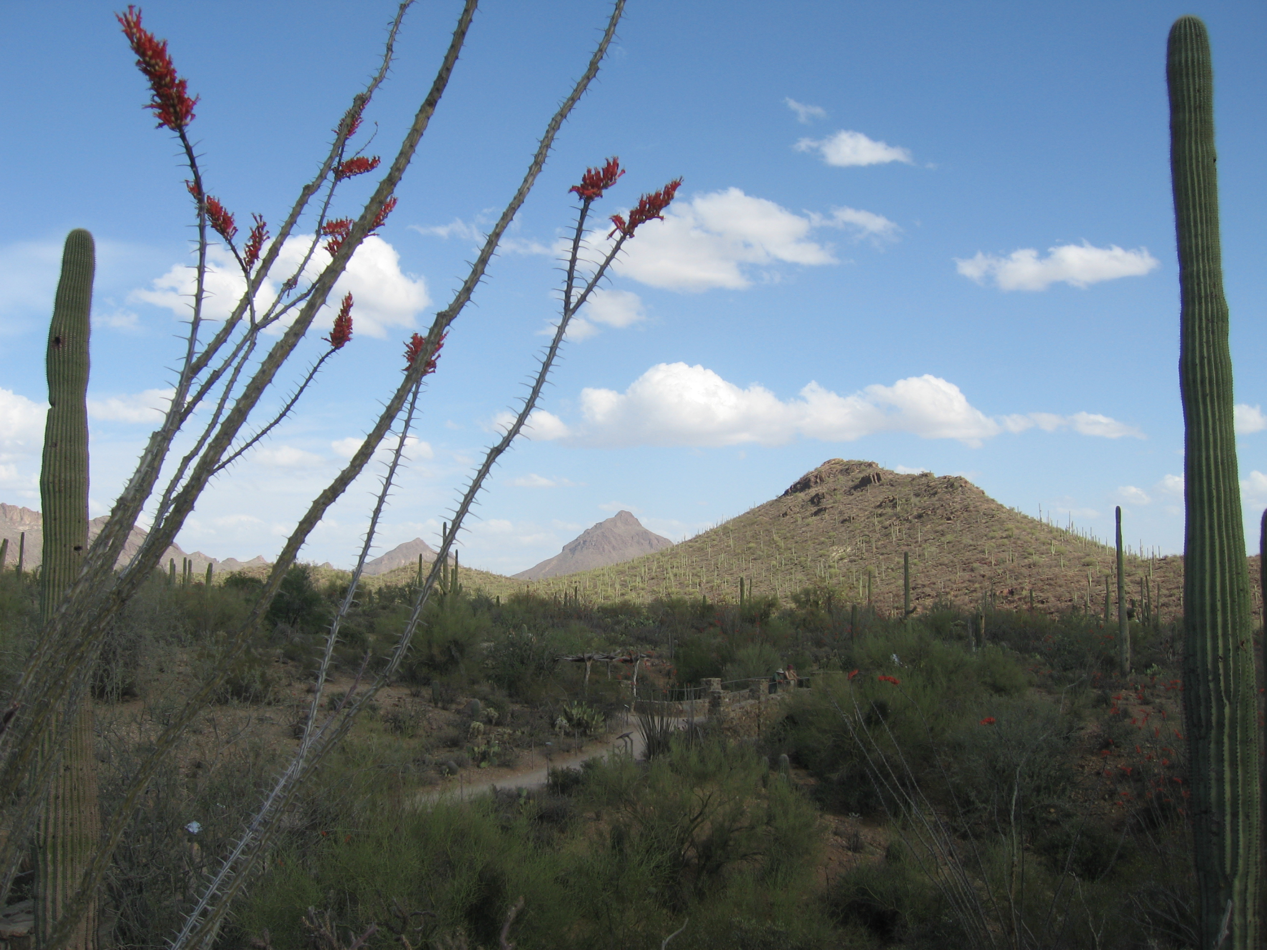 Tucson is home to the ambitious Arizona Plan, to bring the great art of the East to the West.