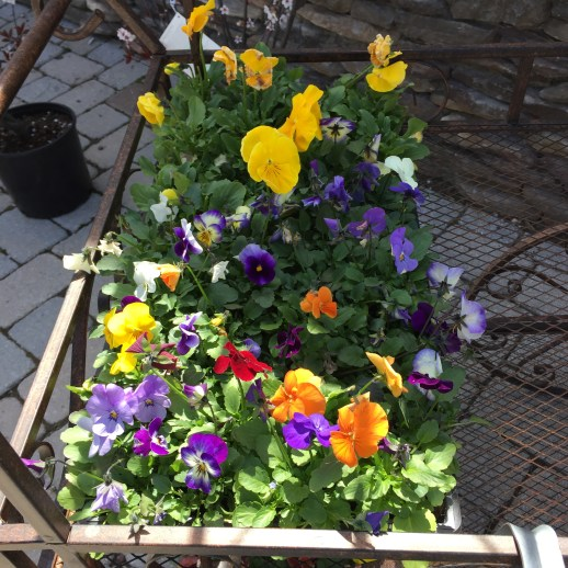 Edward's Garden Center has all your spring flowers!