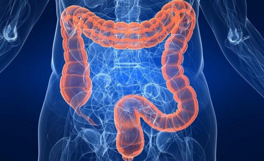 intestino-dottoressa-edy-virgili