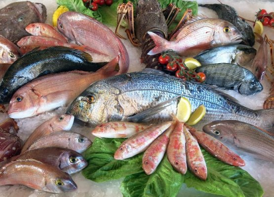 che-pesci-prendere-edy-virgili