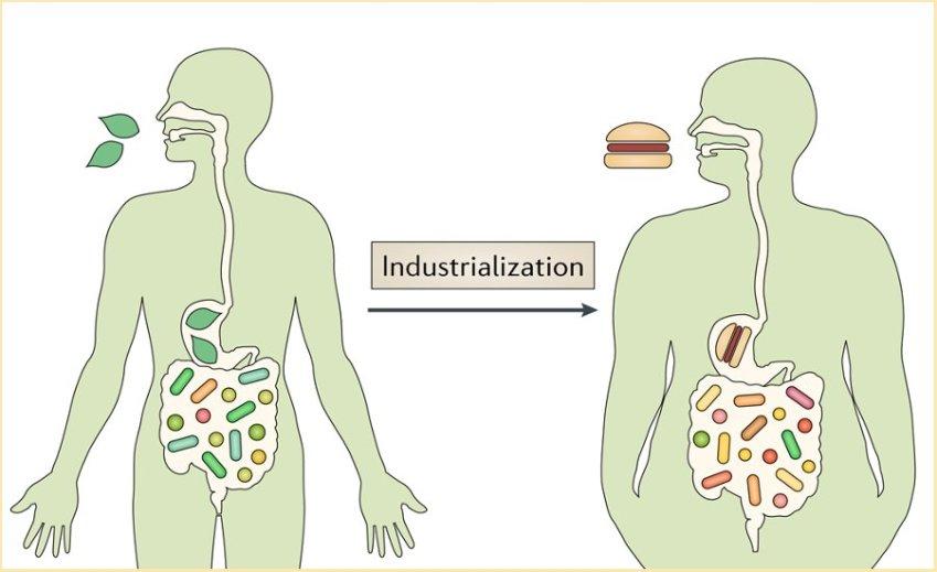 microbiota-ancestrale-e-microbiota-industrializzato-edy-virgili-biologa-nutrizionista