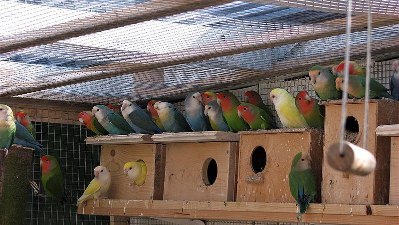Mondial volièrevogels