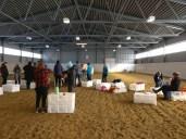 Hevonen seminaarivieraana