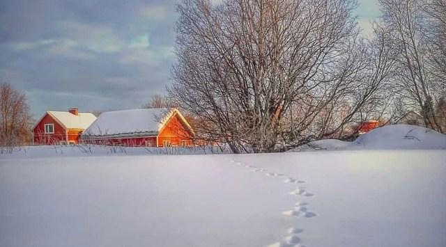 Soome põhjaosas on ilm väga külm ja lund juba 30-40 cm