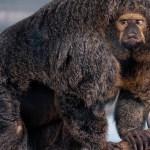 Soome loomaaia musklis ahv lööb laineid maailmas