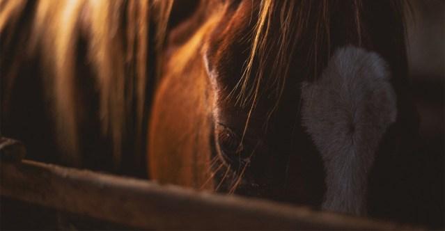 Soome naine räägib ratsaspordi pahupoole kohta: vägistamised on tavalised