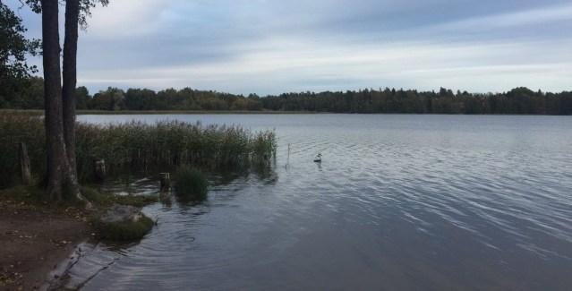 Kole juuni Soomes: niipalju uppumisi oli viimati 22 aastat tagasi