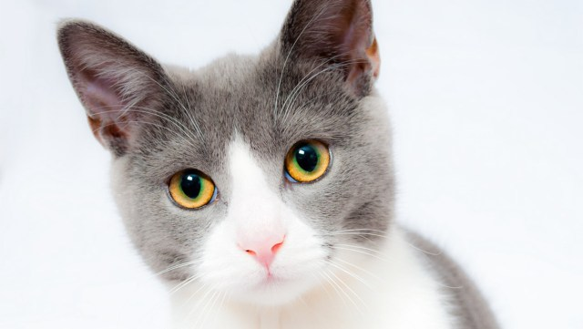 Soomes tõsteti kassipoegade loovutusiga 14 nädala peale