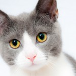 Teadlased: kassid ja koerad tuleks samuti koroona vastu vaktsineerida