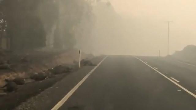 Video: Austraalias on tee ääres TUHANDED söestunud koaalade, kängurude ja lammaste korjused (NB! Nõrganärvilistele mittesoovitav!)