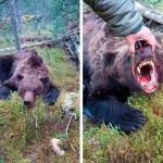 Kole lugu: karu sõi ära 16-aastase poisi