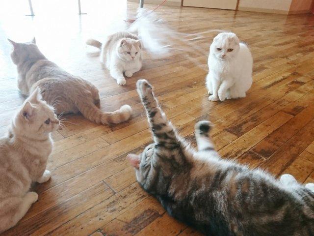 夢猫の猫たち