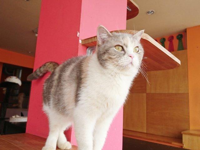 夢猫のかわいい猫さん