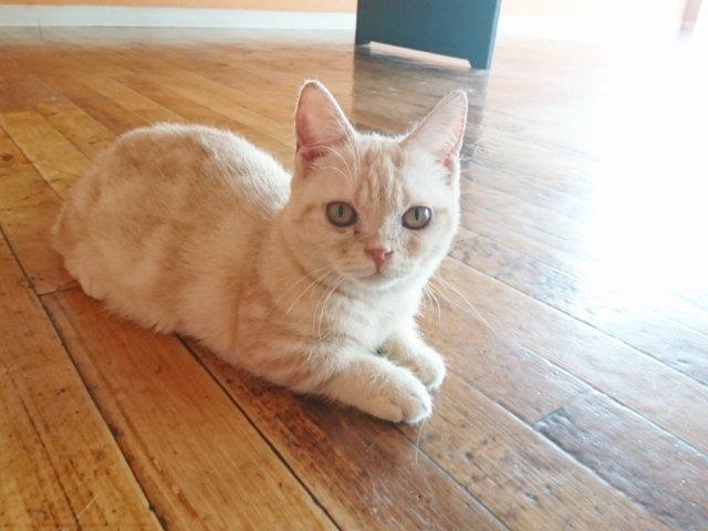 夢猫のかわいい子猫ちゃん
