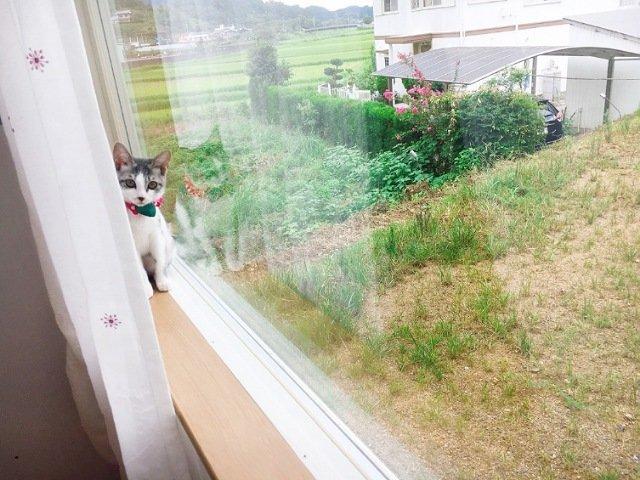 にゃんこメリー:猫2