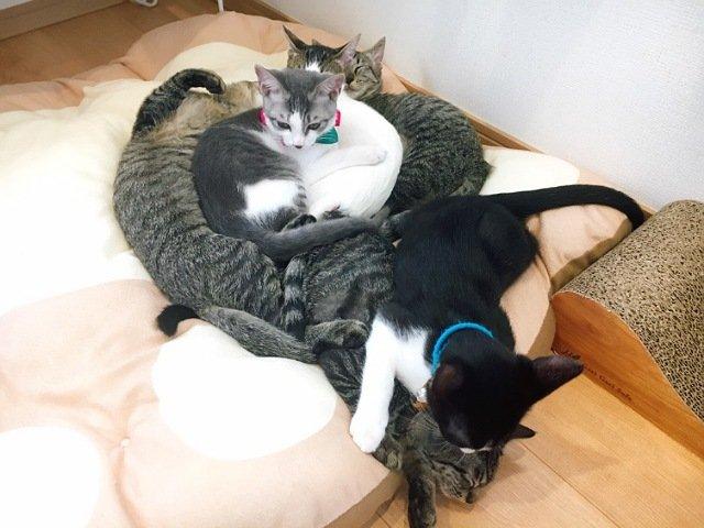 にゃんこメリー:猫1