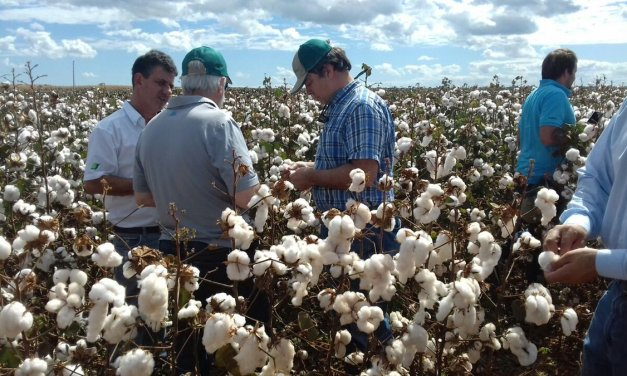 Gensus: enhancing the cotton chain from the seed