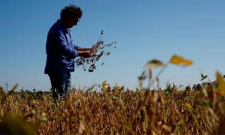Sorry, but China-US trade war has no impact for Argentinean soybean farmers