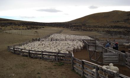 The Patagonian Lamb: a worldwide temptation