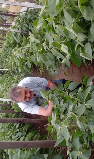 """Julio Ferrarotti: """"Argentinean soybean breeders are at the top of the podium"""""""
