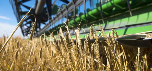 Who are the largest feed and malt barley exporters from Argentina