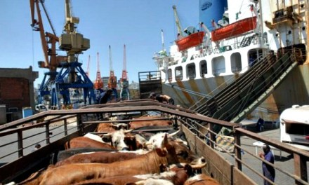 To export or not to export live cattle: that is the question