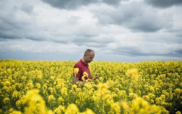 Argentina denies any responsibility in the GMO rapeseed case