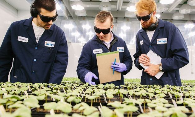 Indigo – most valuable agtech startup in the world- begins operations in Brazil
