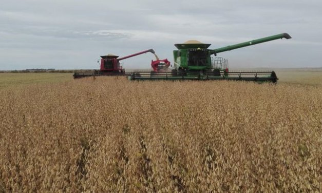 Argentine soybean and corn harvest estimates rise to 54.5 and 50 million tons