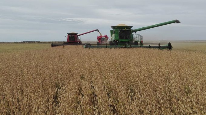 Argentinian farmers increase the use of STS soybean (updated)