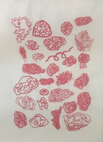 corals and seaweeds