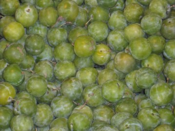 Greengages_0
