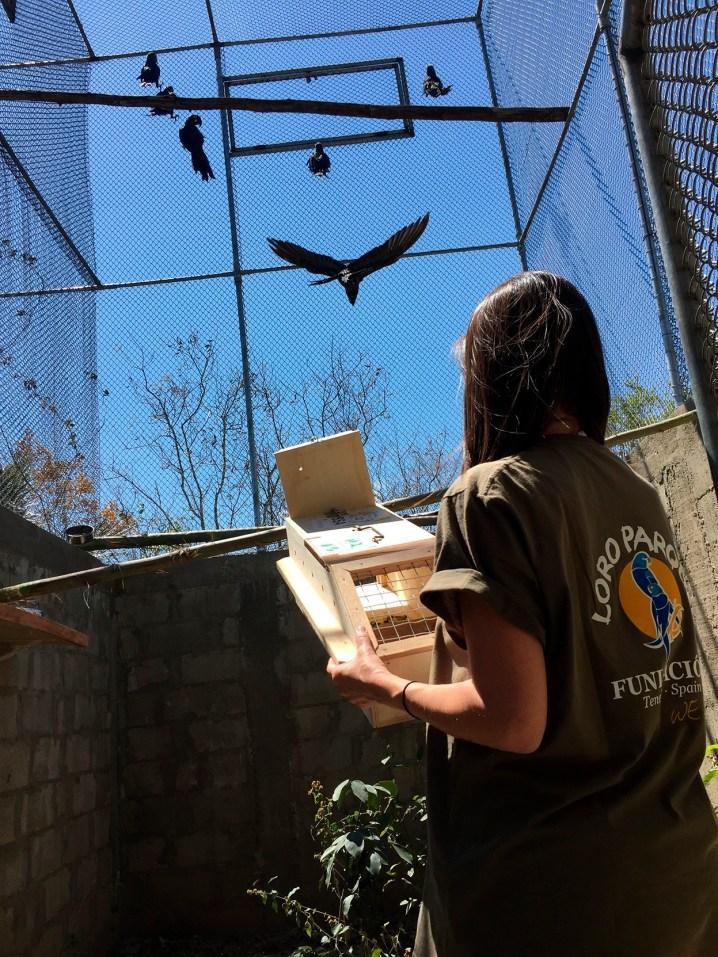La adaptación de las aves pasa por un gran aviario de aclimatación en la zona. Foto: Thiago Filadelfo